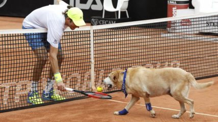 Brazilian Open tennis tournament has gone to the dogs